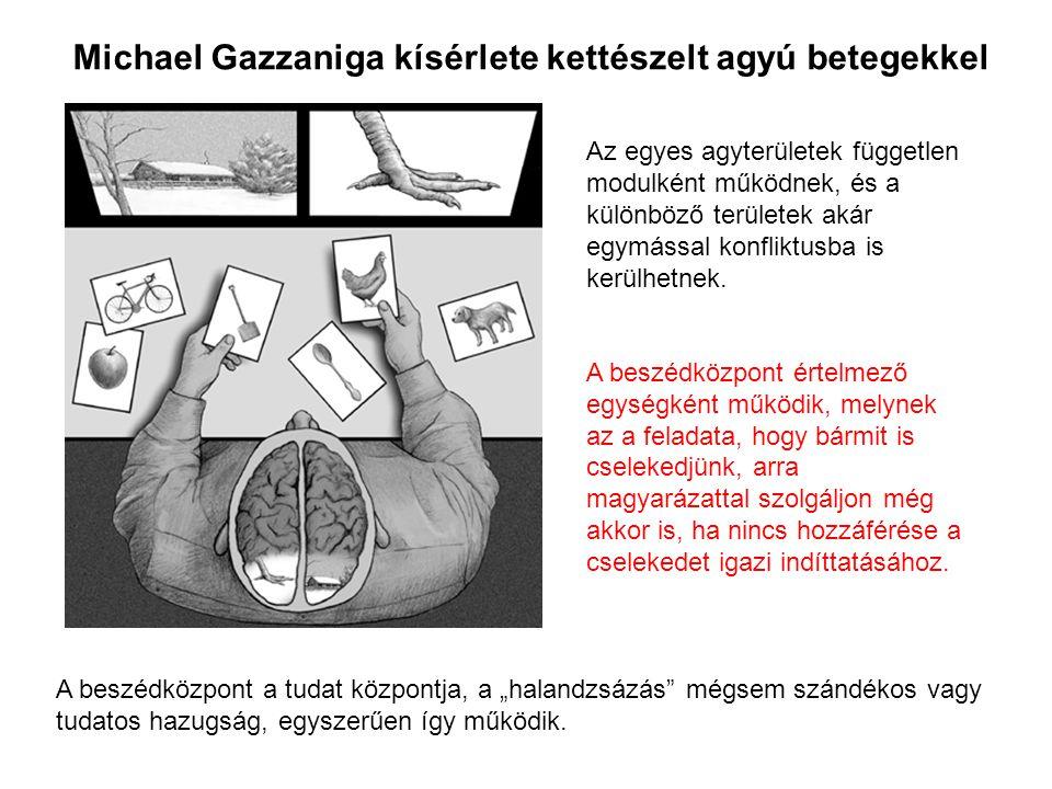 Az egyes agyterületek független modulként működnek, és a különböző területek akár egymással konfliktusba is kerülhetnek. A beszédközpont értelmező egy