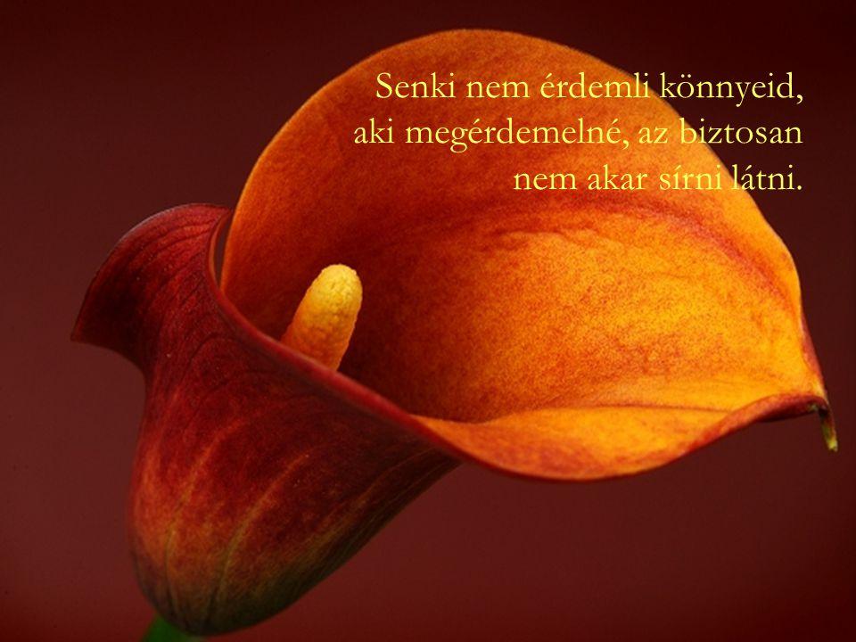S ha cudar is sokszor az élet, Mindig találni benne kedveset, szépet!