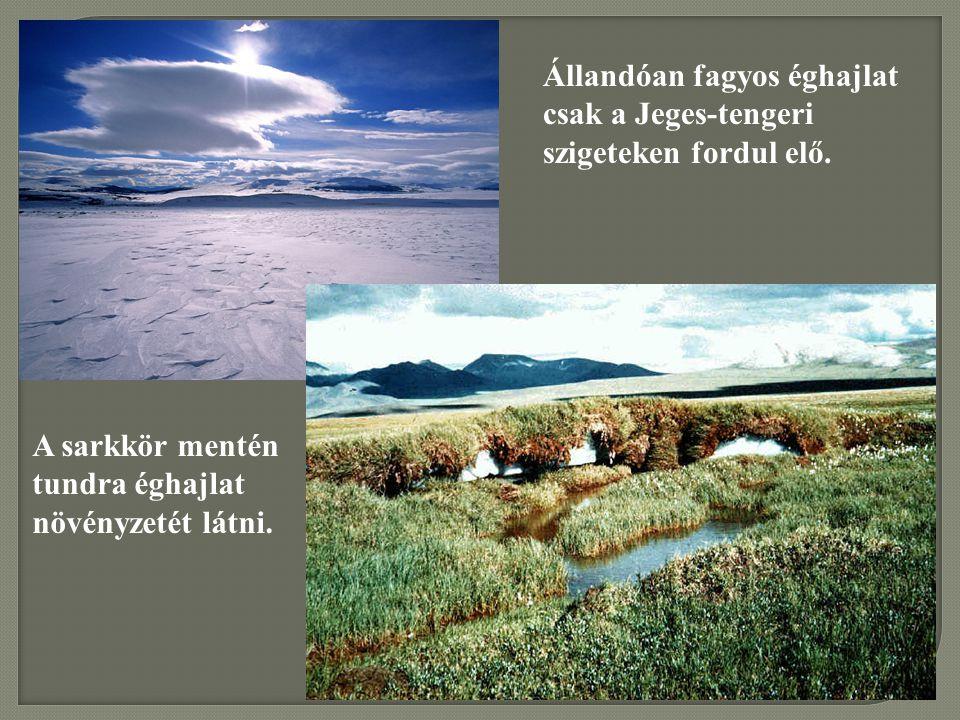Állandóan fagyos éghajlat csak a Jeges-tengeri szigeteken fordul elő. A sarkkör mentén tundra éghajlat növényzetét látni.