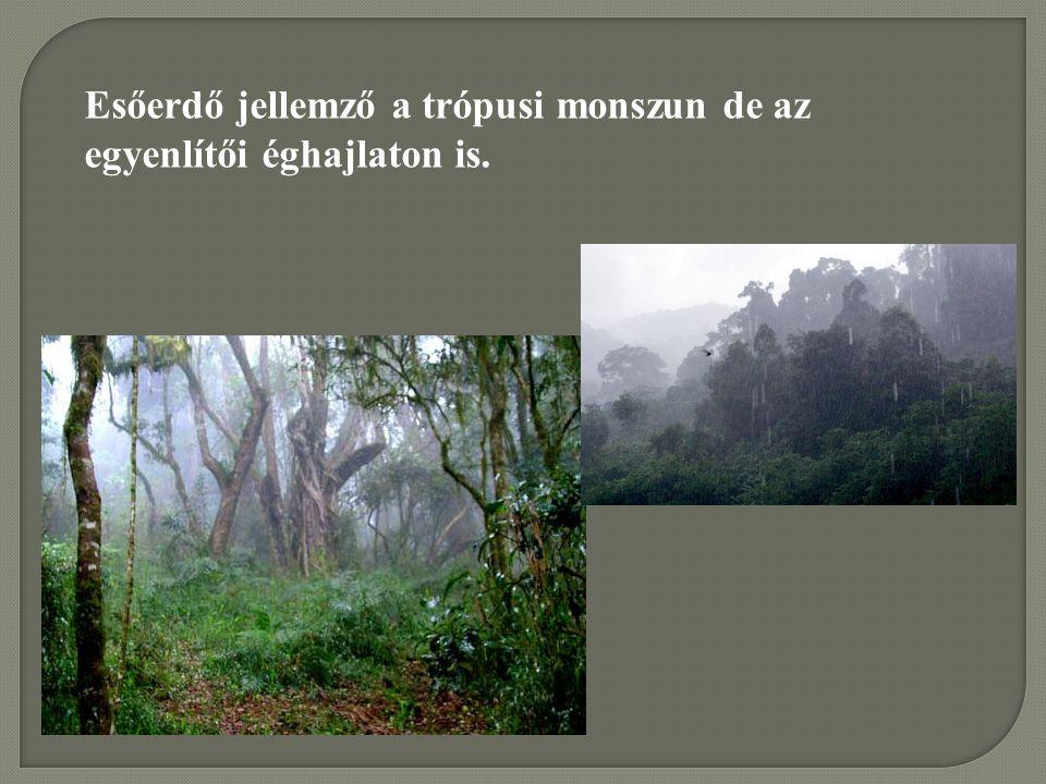 Esőerdő jellemző a trópusi monszun de az egyenlítői éghajlaton is.