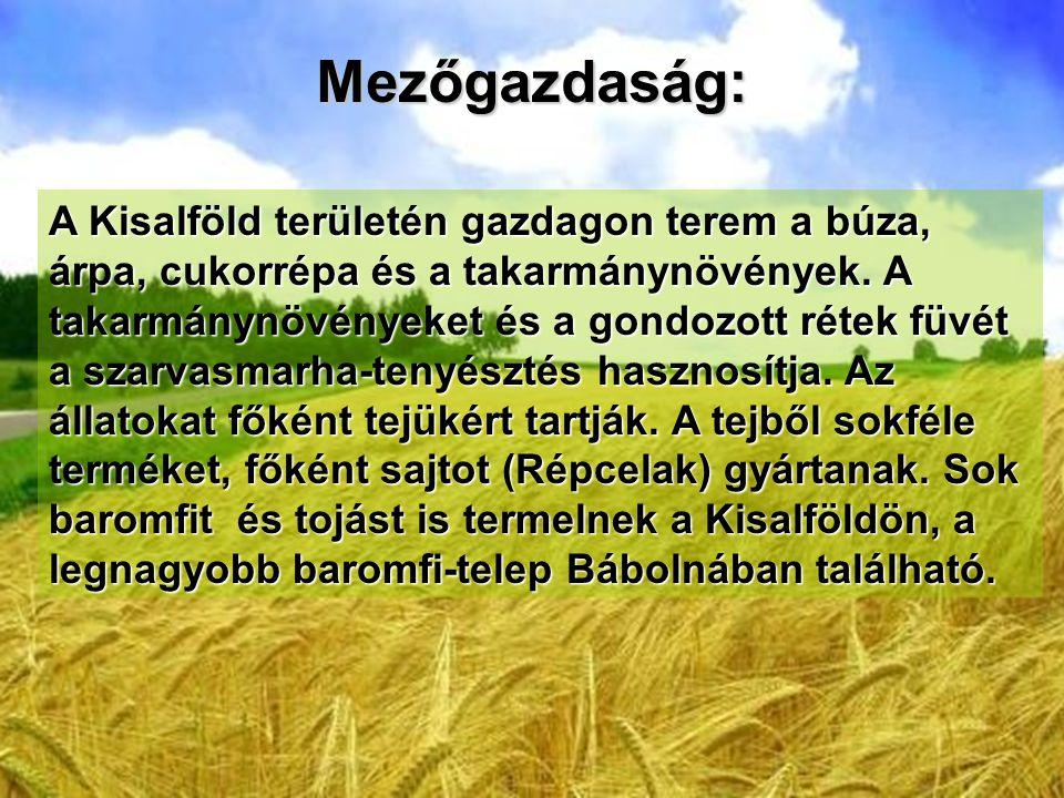 Mezőgazdaság: A Kisalföld területén gazdagon terem a búza, árpa, cukorrépa és a takarmánynövények. A takarmánynövényeket és a gondozott rétek füvét a