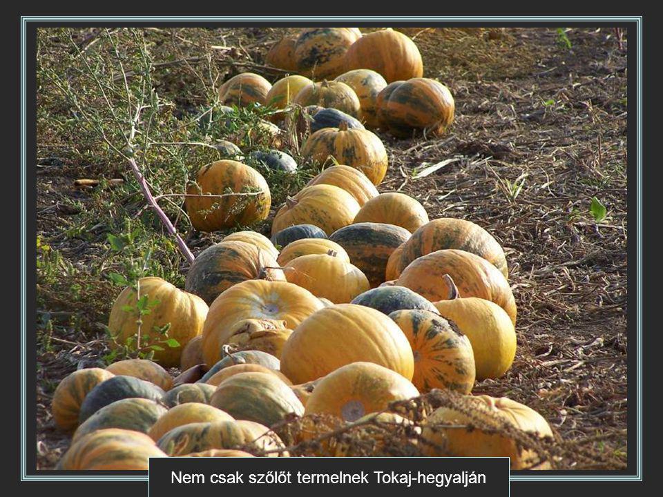 Nem csak szőlőt termelnek Tokaj-hegyalján