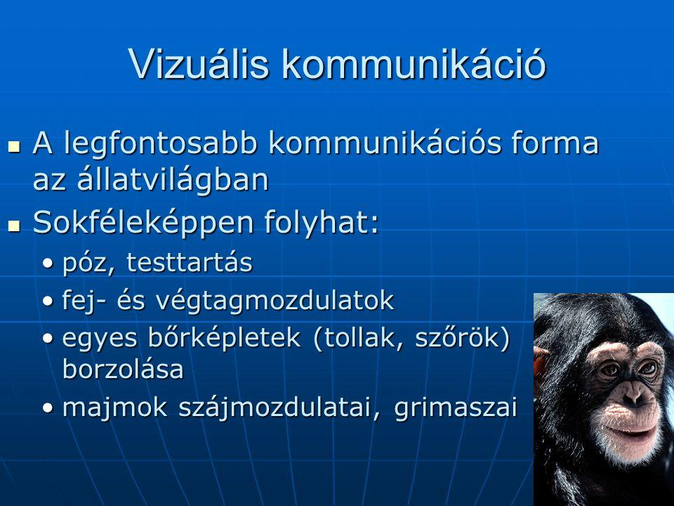Vizuális kommunikáció A legfontosabb kommunikációs forma az állatvilágban A legfontosabb kommunikációs forma az állatvilágban Sokféleképpen folyhat: S