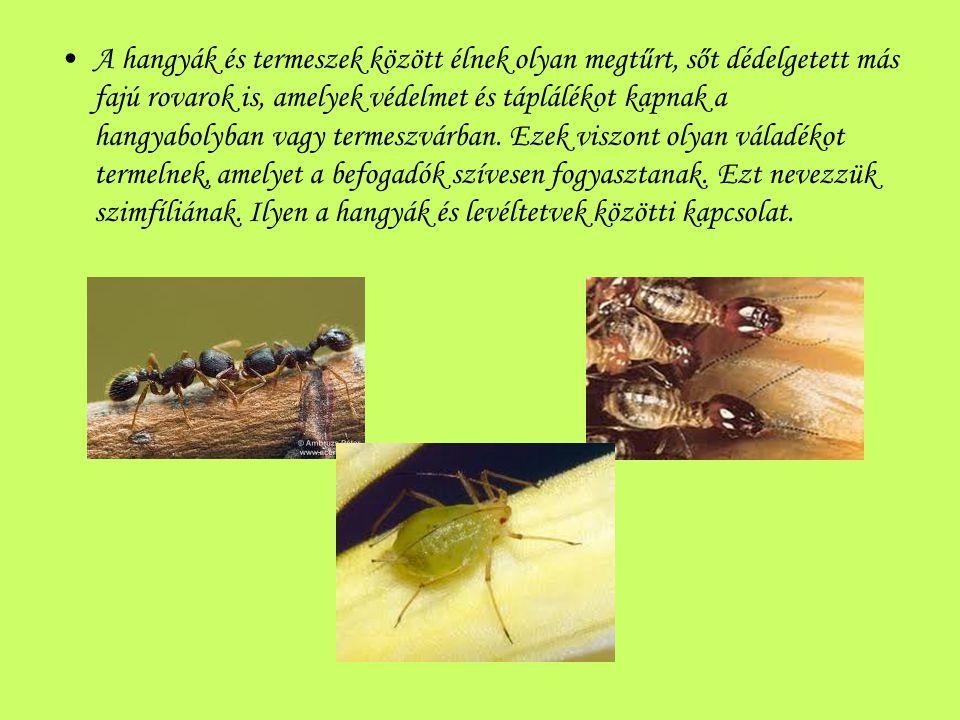 A hangyák és termeszek között élnek olyan megtűrt, sőt dédelgetett más fajú rovarok is, amelyek védelmet és táplálékot kapnak a hangyabolyban vagy ter