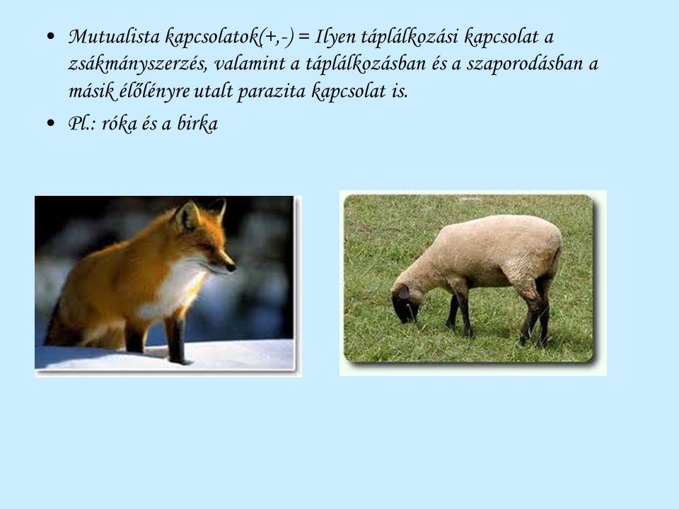 Mutualista kapcsolatok(+,-) = Ilyen táplálkozási kapcsolat a zsákmányszerzés, valamint a táplálkozásban és a szaporodásban a másik élőlényre utalt par