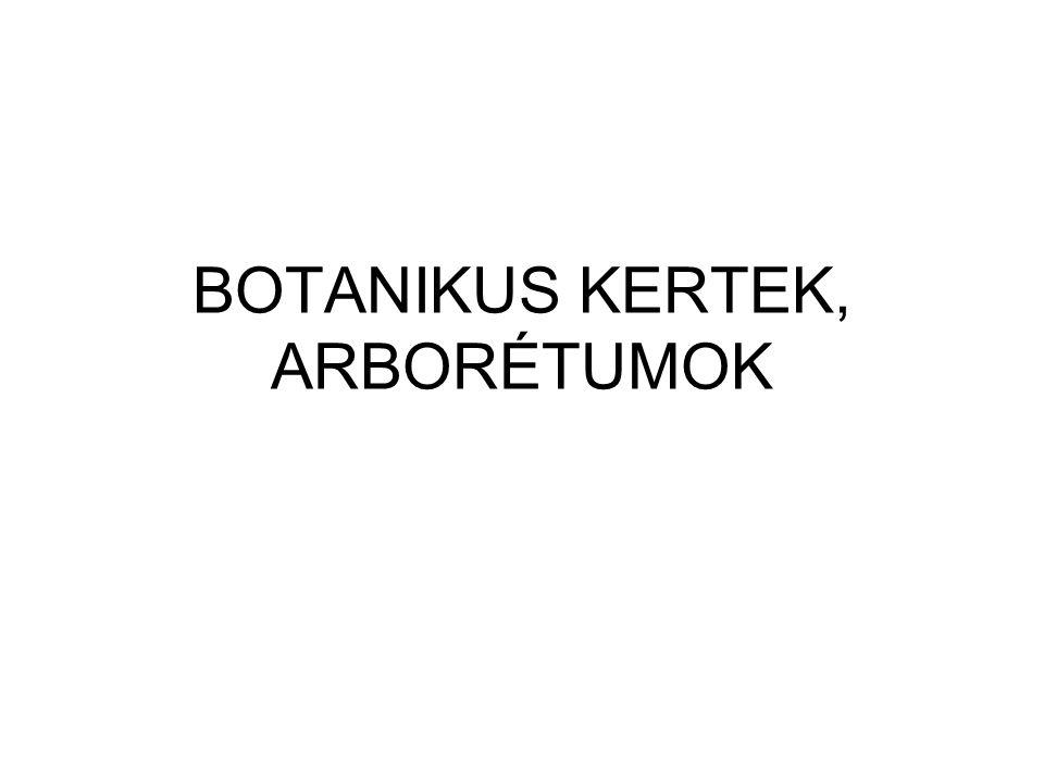 BOTANIKUS KERTEK, ARBORÉTUMOK