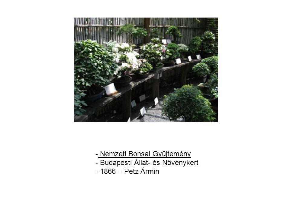 - Nemzeti Bonsai Gyűjtemény - Budapesti Állat- és Növénykert - 1866 – Petz Ármin