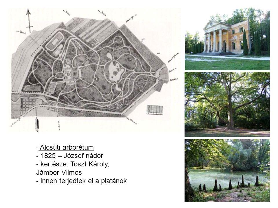 - Alcsúti arborétum - 1825 – József nádor - kertésze: Toszt Károly, Jámbor Vilmos - innen terjedtek el a platánok