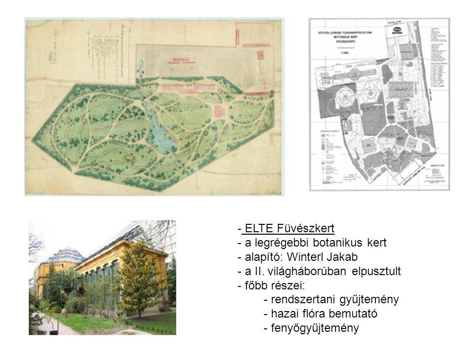 - ELTE Füvészkert - a legrégebbi botanikus kert - alapító: Winterl Jakab - a II. világháborúban elpusztult - főbb részei: - rendszertani gyűjtemény -