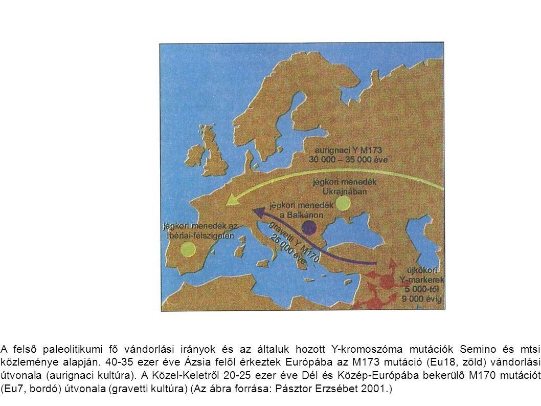 A felső paleolitikumi fő vándorlási irányok és az általuk hozott Y-kromoszóma mutációk Semino és mtsi közleménye alapján. 40-35 ezer éve Ázsia felől é