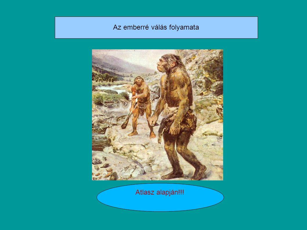 Ember kialakulása Koponyájáról eltünt a konty Agytérfogata: 1500cm Homo Sapiens Sapiens állcsúcs