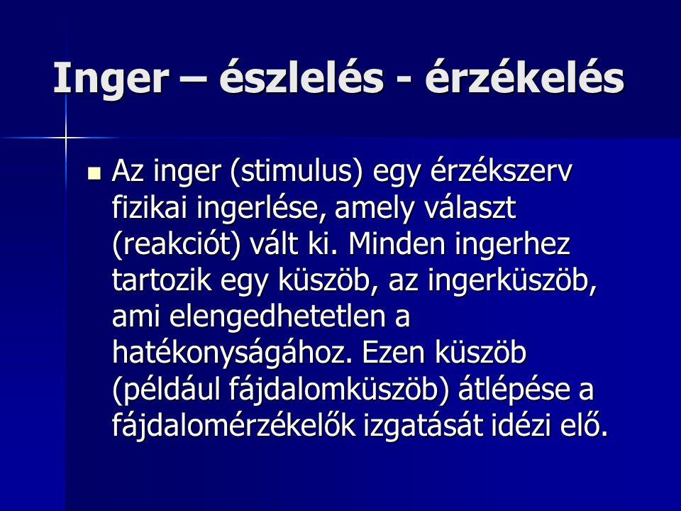 Inger – észlelés - érzékelés Az inger (stimulus) egy érzékszerv fizikai ingerlése, amely választ (reakciót) vált ki. Minden ingerhez tartozik egy küsz