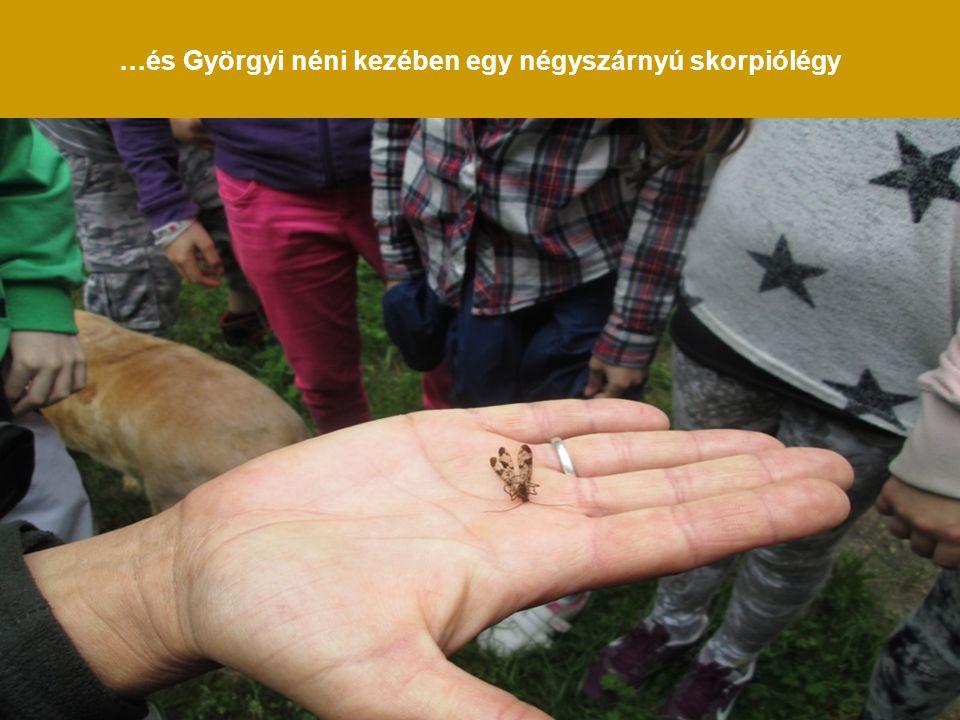 …és Györgyi néni kezében egy négyszárnyú skorpiólégy