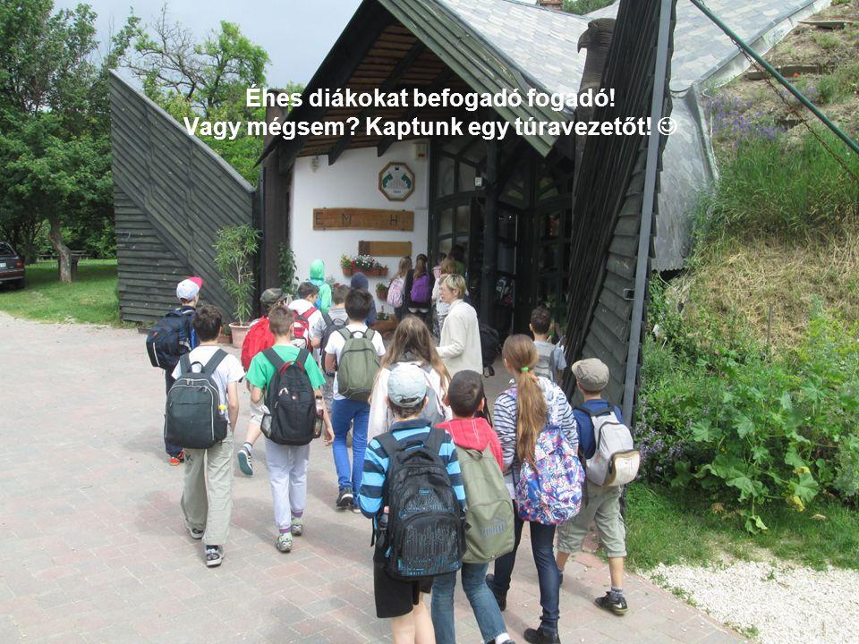 Éhes diákokat befogadó fogadó! Vagy mégsem Kaptunk egy túravezetőt!
