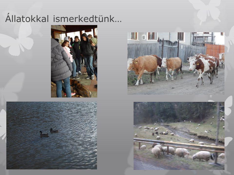 Állatokkal ismerkedtünk…
