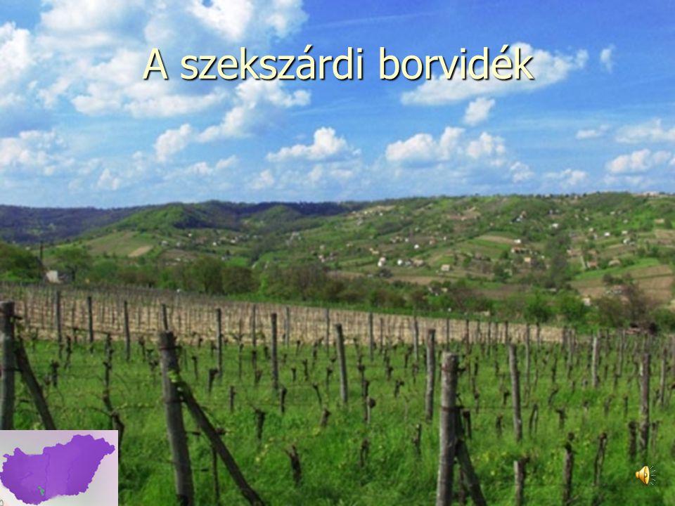 Az aszú elkészítésének alapelvei 1.A szőlő művelése és metszése.
