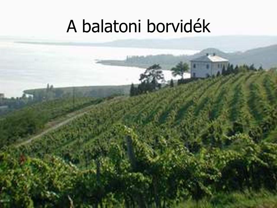 A Cserszegi fűszeres A fajtát 1960-ban a Keszthely melletti Cserszegtomajon Bakonyi Károly keresztezte két másik szőlőfajtából.