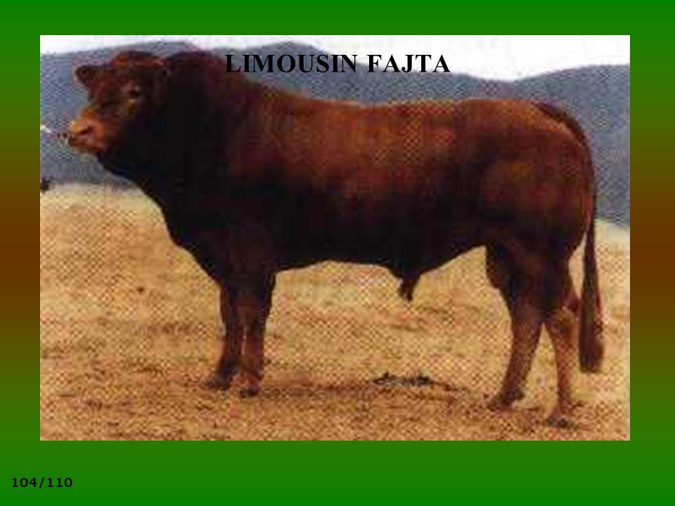 104/110 LIMOUSIN FAJTA