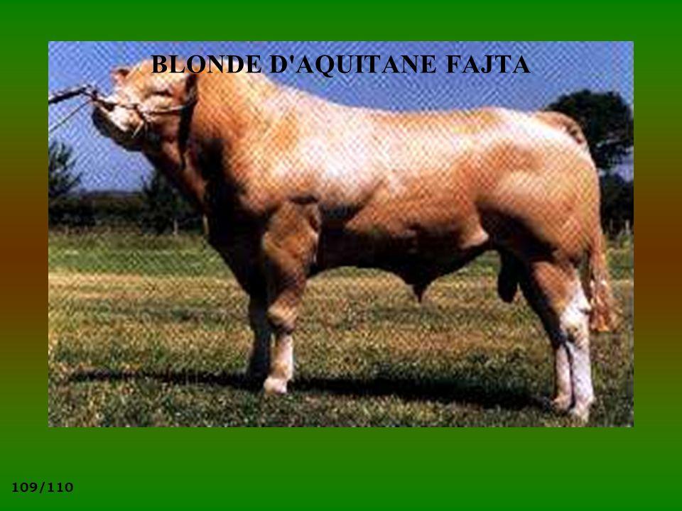 109/110 BLONDE D'AQUITANE FAJTA