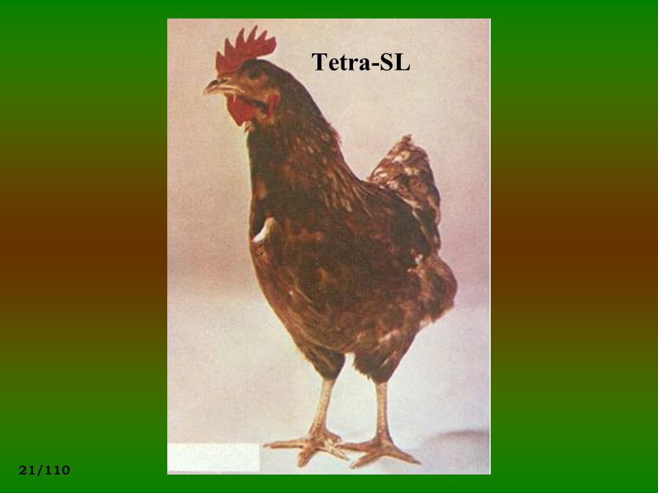 21/110 Tetra-SL
