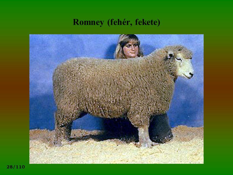 28/110 Romney (fehér, fekete)