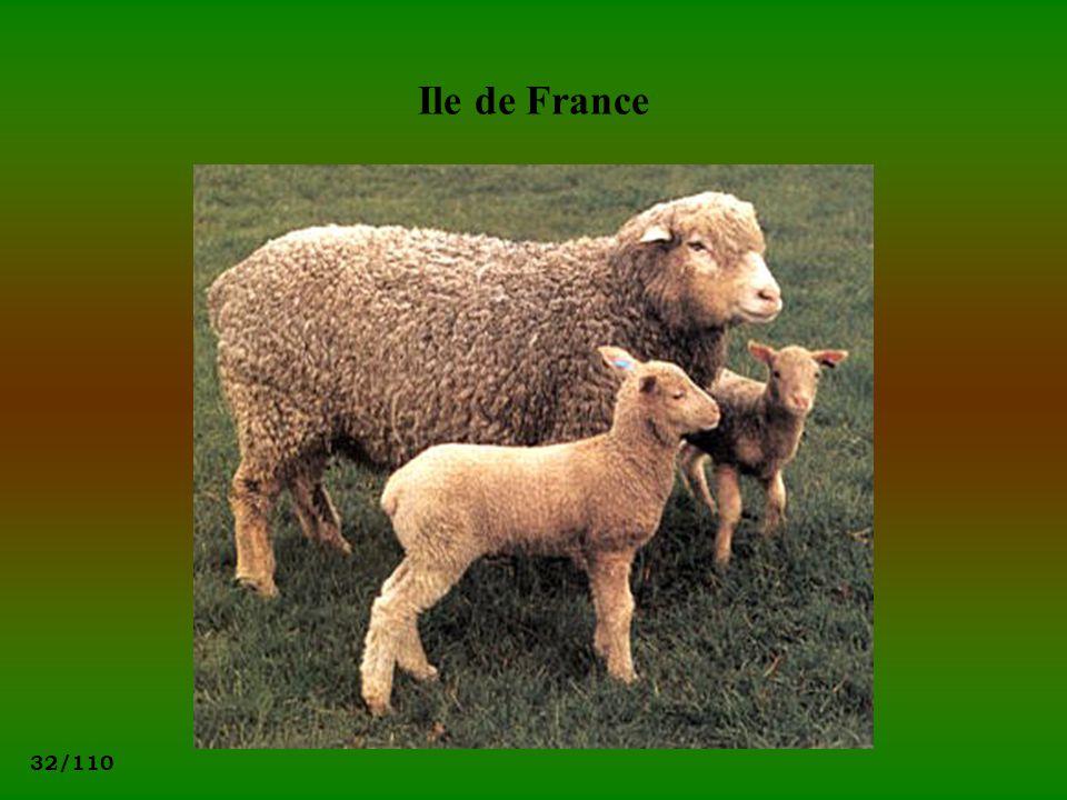 32/110 Ile de France