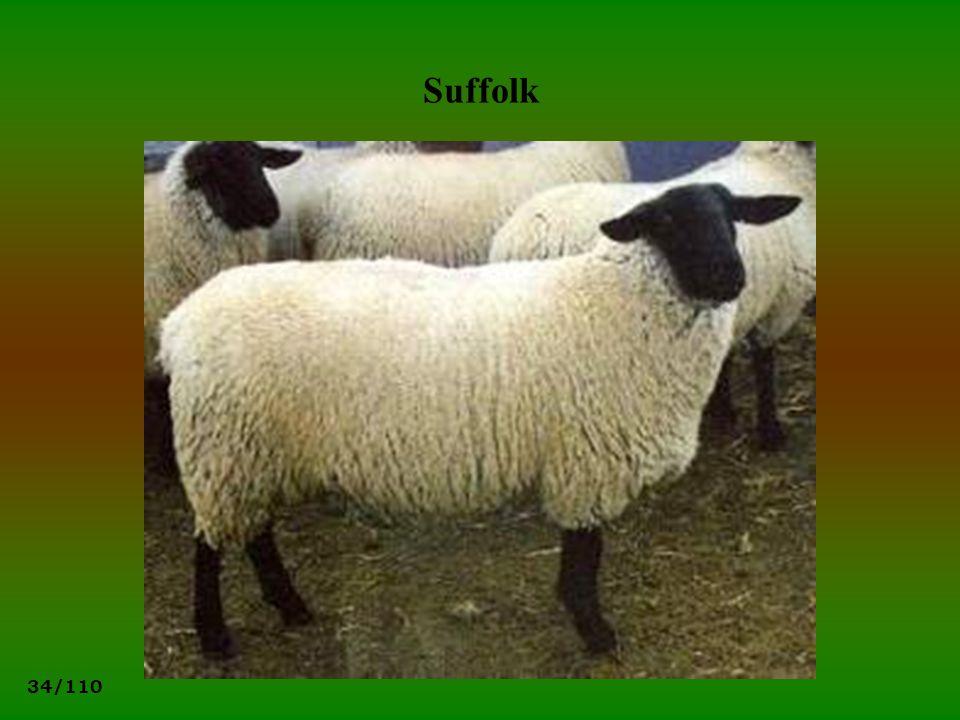 34/110 Suffolk