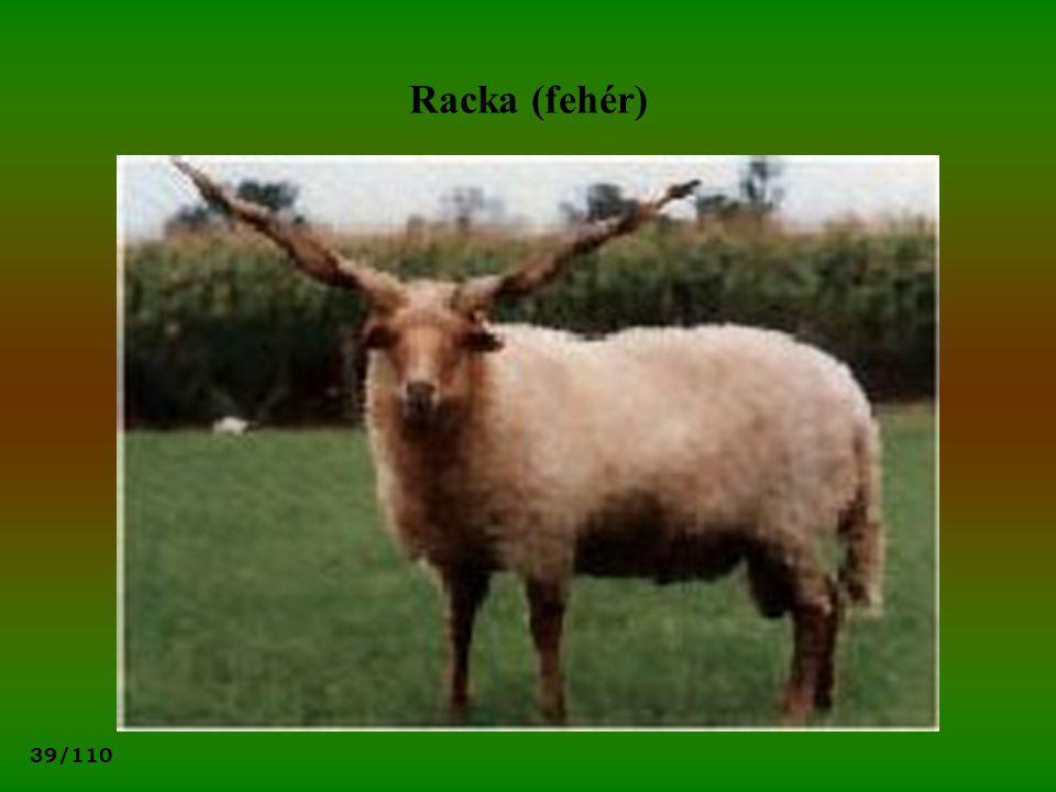 39/110 Racka (fehér)