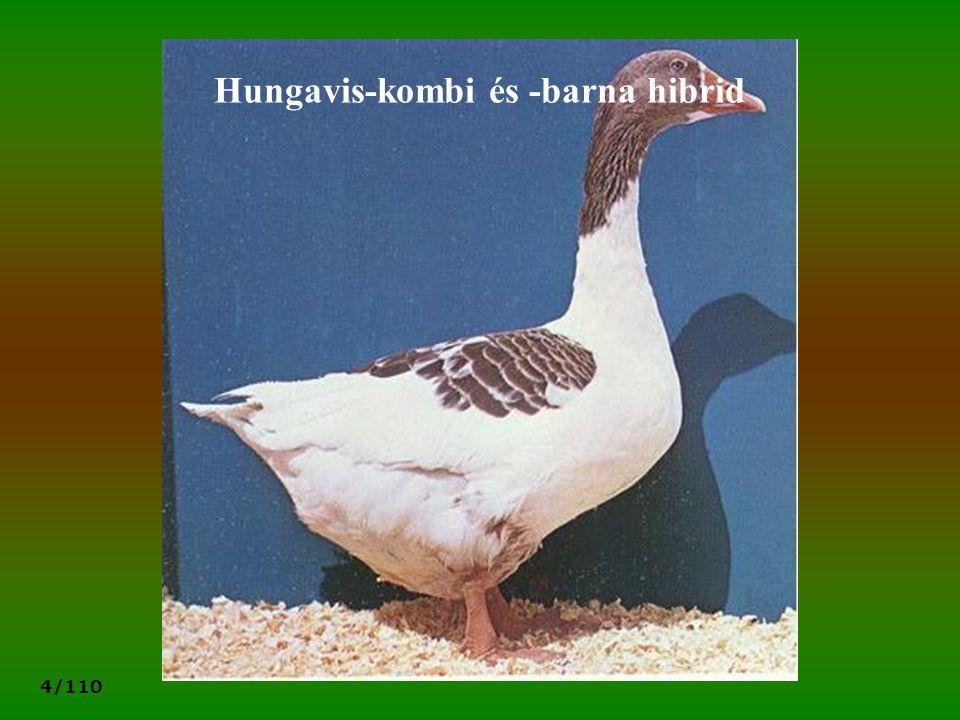 4/110 Hungavis-kombi és -barna hibrid