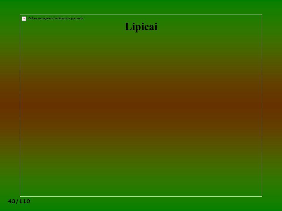 43/110 Lipicai
