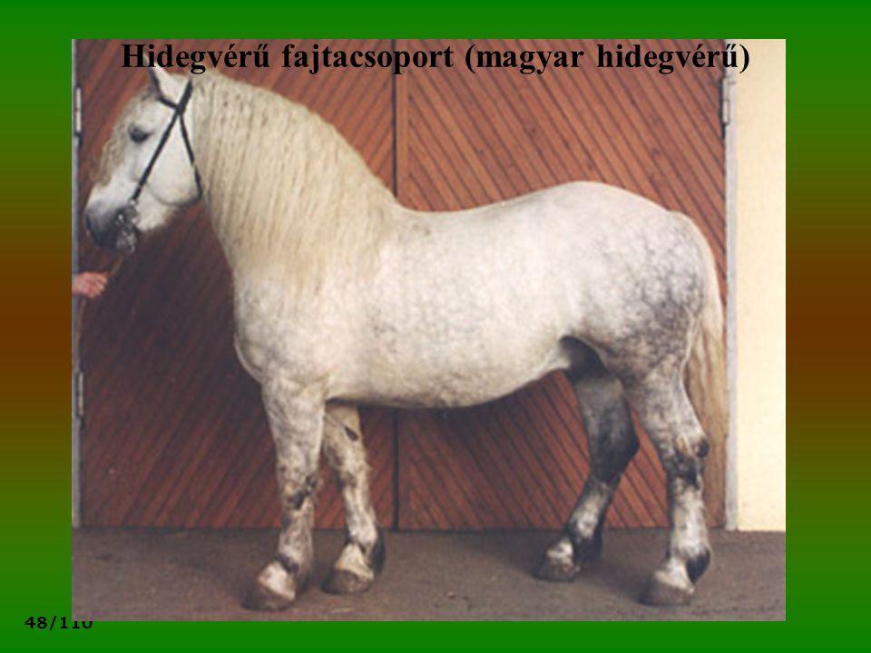 48/110 Hidegvérű fajtacsoport (magyar hidegvérű)