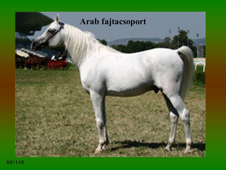 50/110 Arab fajtacsoport