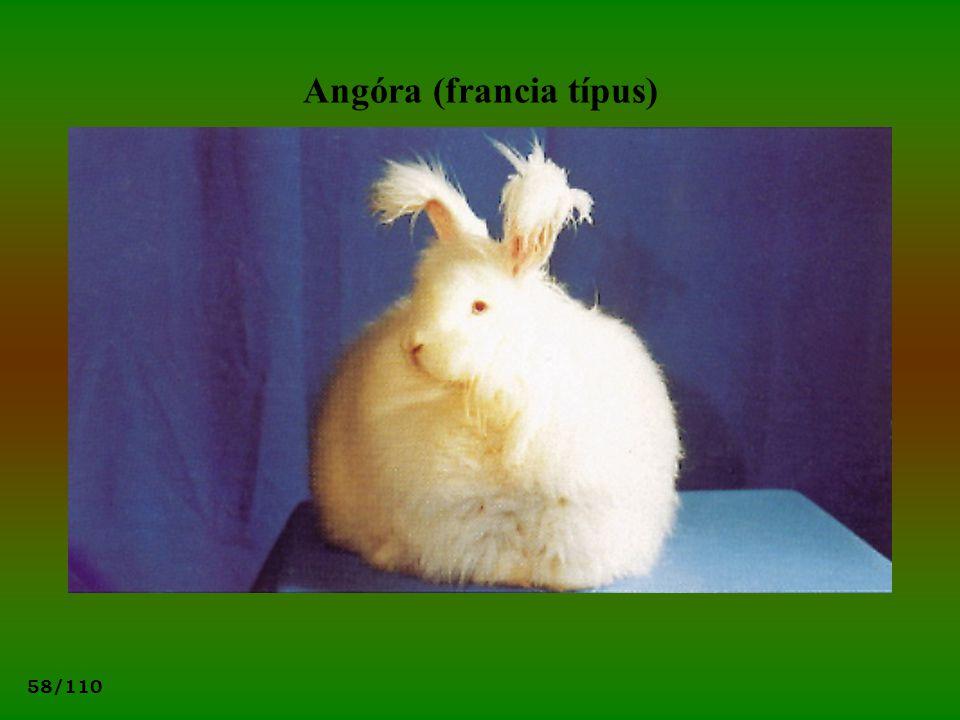 58/110 Angóra (francia típus)