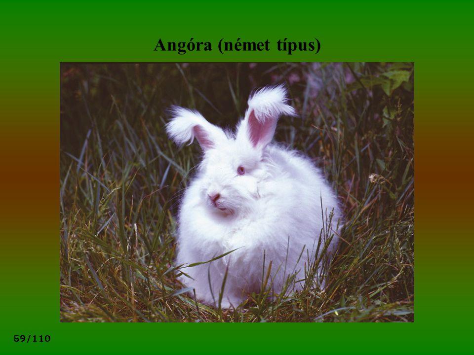 59/110 Angóra (német típus)