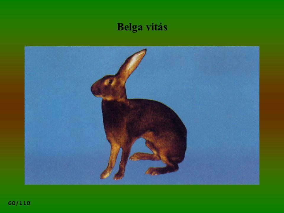 60/110 Belga vitás