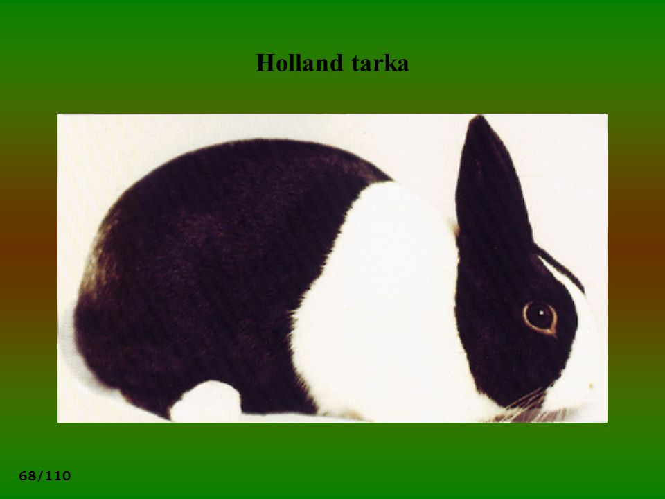 68/110 Holland tarka