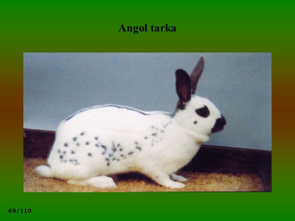 69/110 Angol tarka