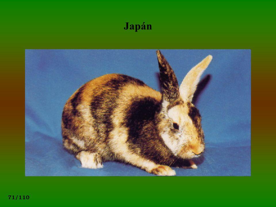 71/110 Japán