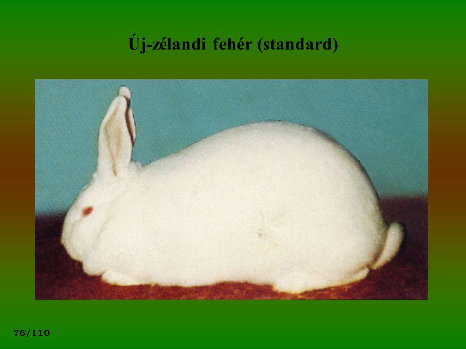 76/110 Új-zélandi fehér (standard)