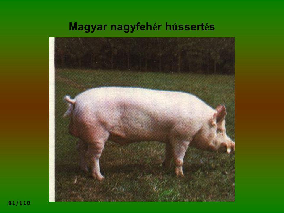 81/110 Magyar nagyfeh é r h ú ssert é s