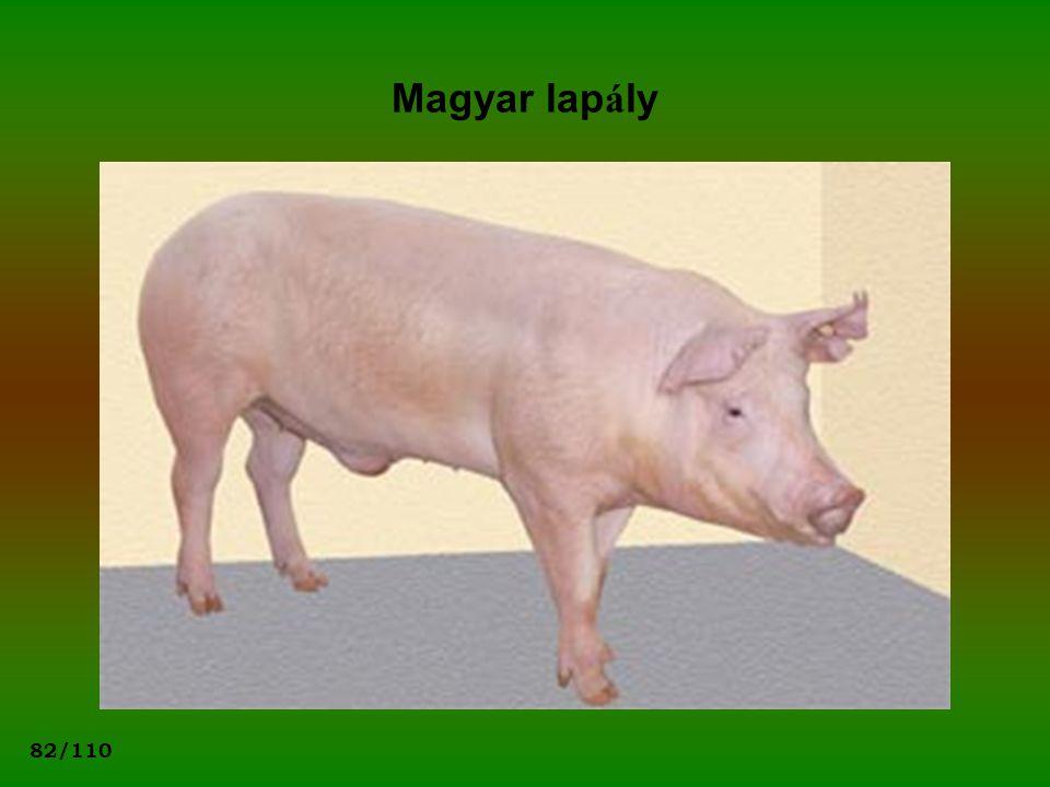 82/110 Magyar lap á ly