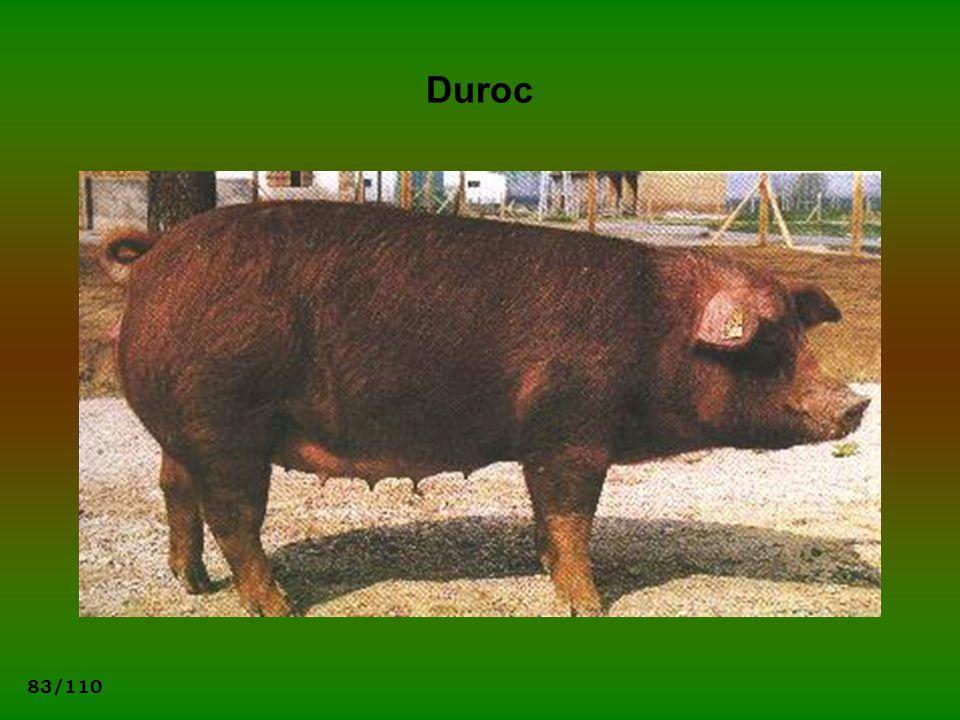 83/110 Duroc