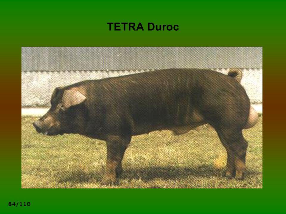 84/110 TETRA Duroc