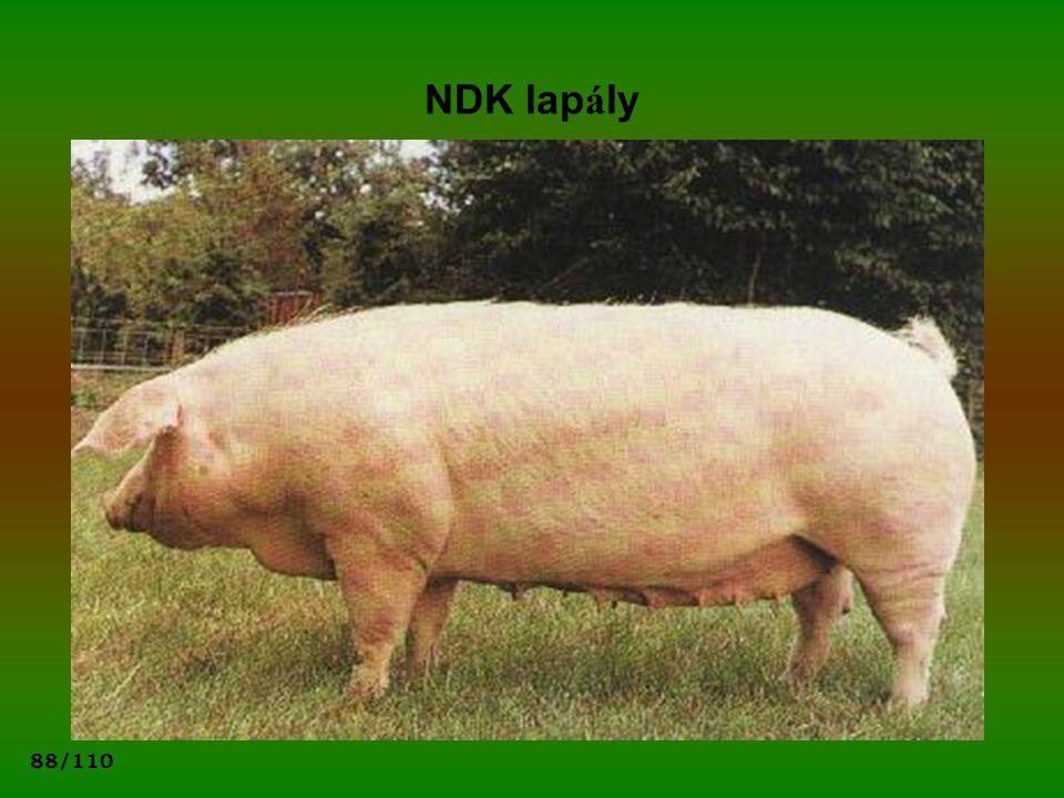 88/110 NDK lap á ly