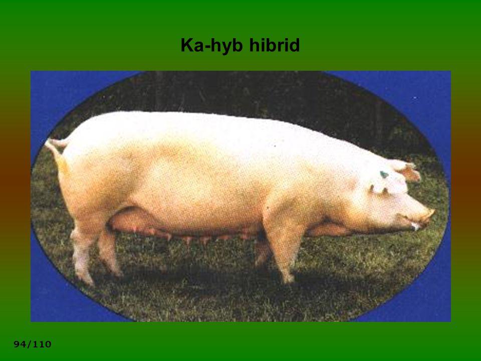 94/110 Ka-hyb hibrid