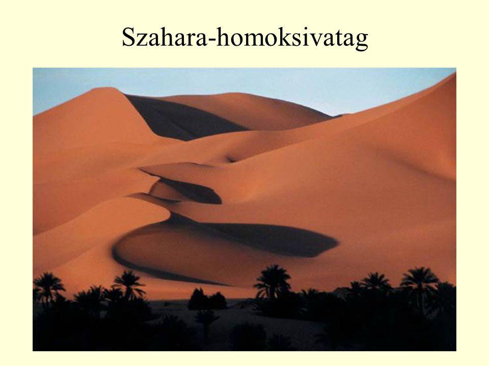 Szahara-homoksivatag