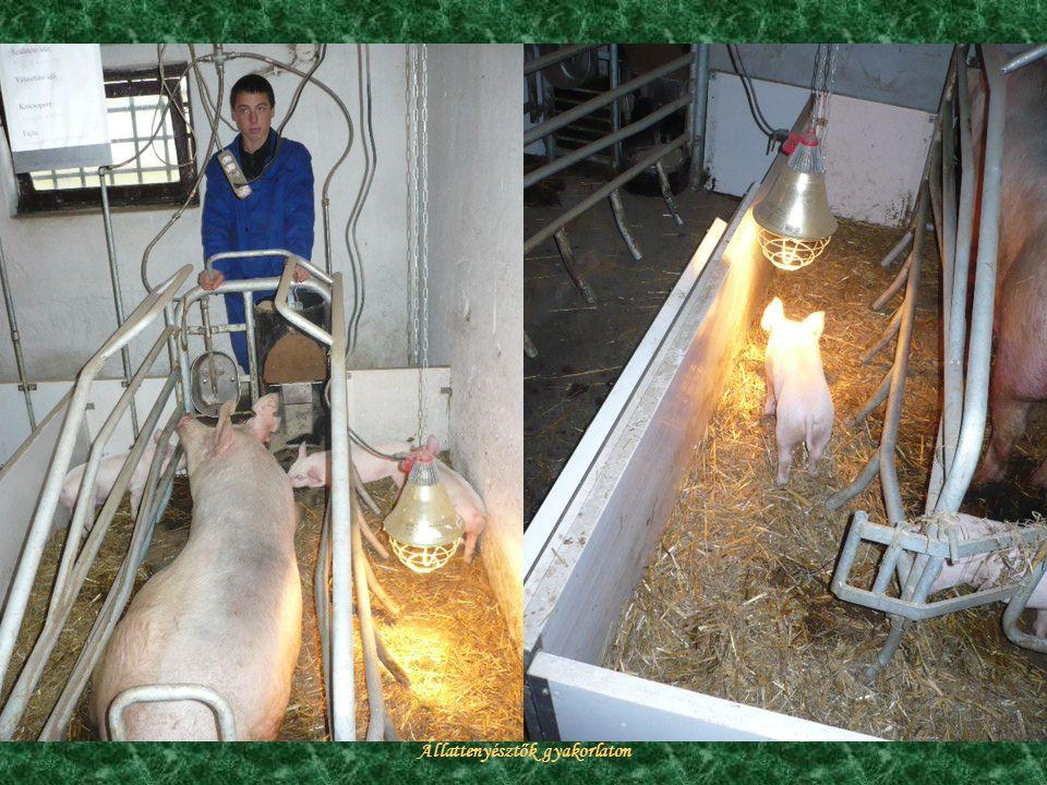 Állattenyésztők gyakorlaton