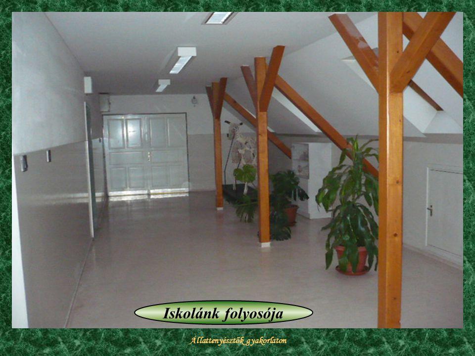 Iskolánk folyosója