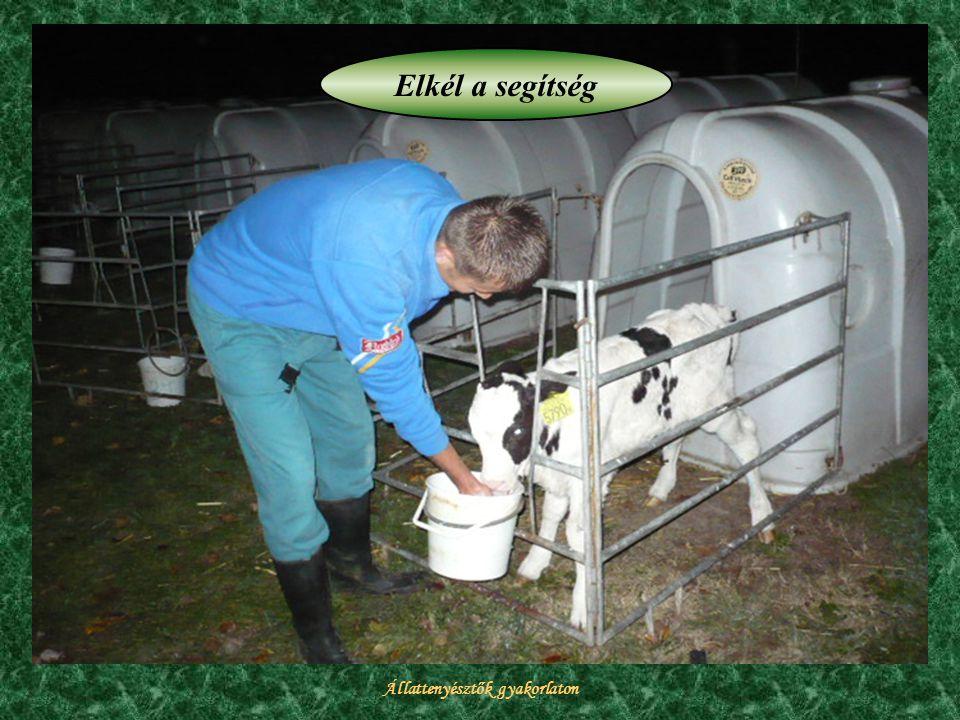 Állattenyésztők gyakorlaton Elkél a segítség