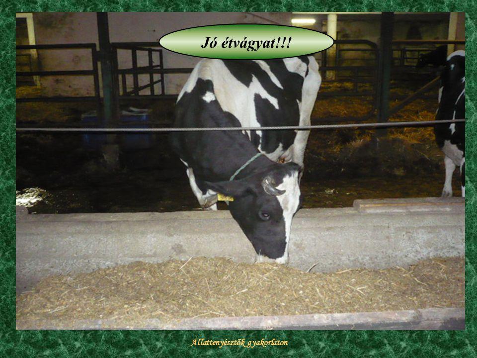 Állattenyésztők gyakorlaton Jó étvágyat!!!